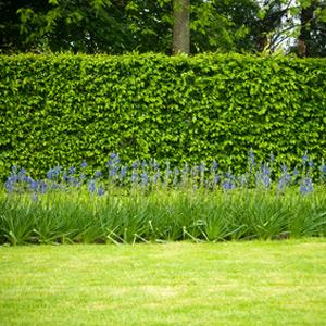 herbst die perfekte jahreszeit um eine hecke zu pflanzen garten kayser. Black Bedroom Furniture Sets. Home Design Ideas