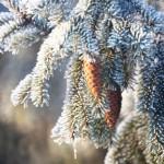 weihnachtsbaum-tipps