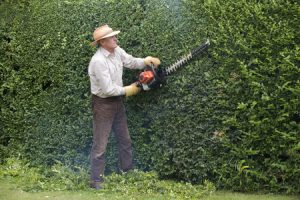 43154178 - cutting garden hedge with a petrol hedgecutter
