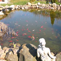 Teichfische In Der Kalten Jahreszeit Richtig Futtern Garten Kayser