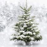 weihnachtsbaum-garten