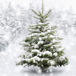 rund um den weihnachtsbaum die besten tipps teil 1 garten kayser. Black Bedroom Furniture Sets. Home Design Ideas
