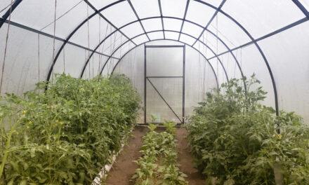 Tomatendach: Eine sinnvolle Anschaffung