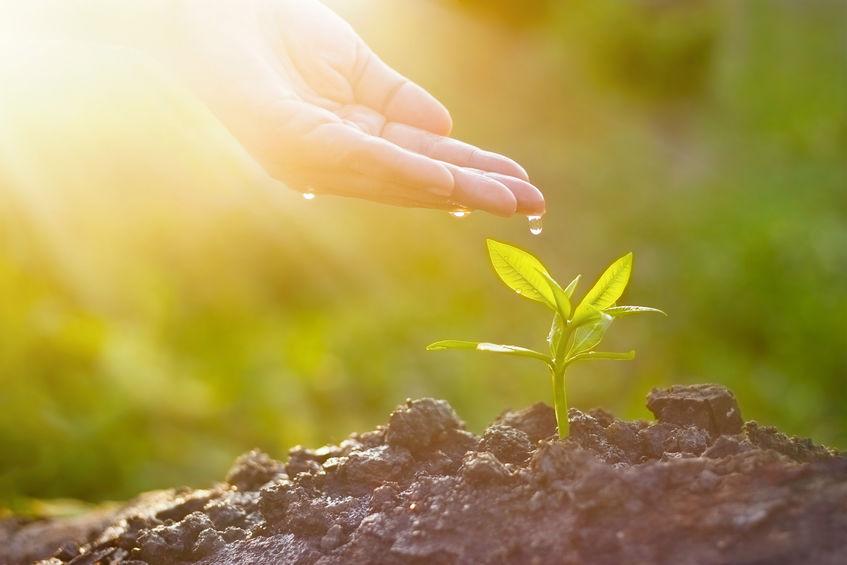 Pflanzensensoren: das ideale Hilfsmittel