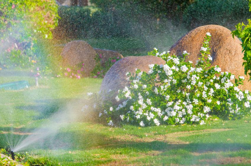 So überleben Garten-Pflanzen sicher Ihren Sommerurlaub