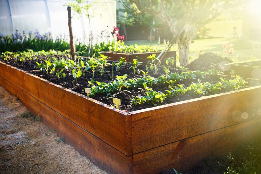 Hochbeete im Garten: Bequemer Blickfang mit sattem Nutzen