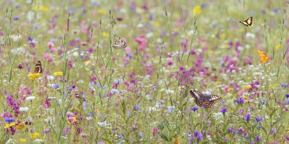 Tipps für einen nachhaltigen Garten