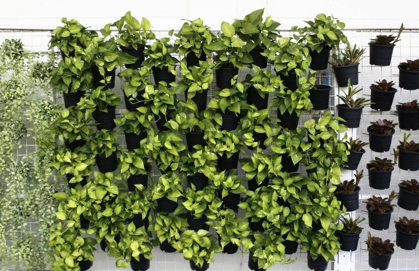 Vertikale Gärten: Was der neue Trend zu bieten hat