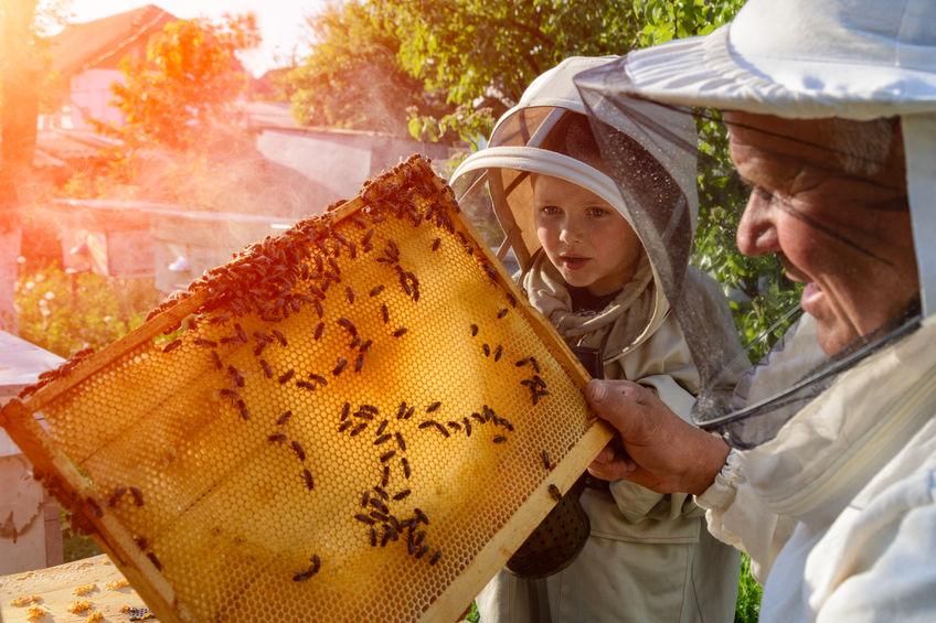 Bienen mieten – eine Option für Hobbygärtner?