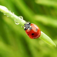 Diese Nützlinge bereichern Ihren Garten