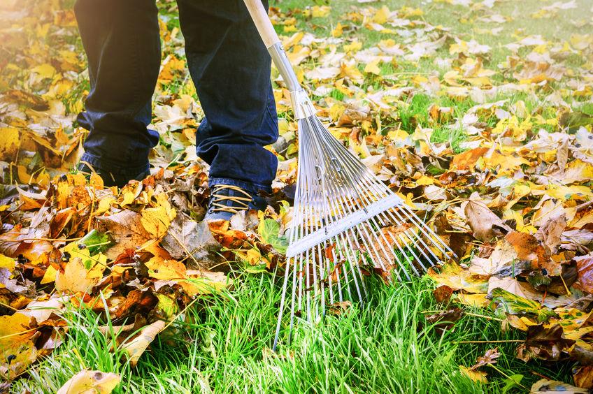 So wird der Garten fit für den Herbst