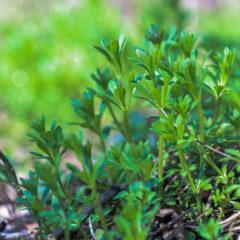 Essbare Pflanzen aus dem Garten