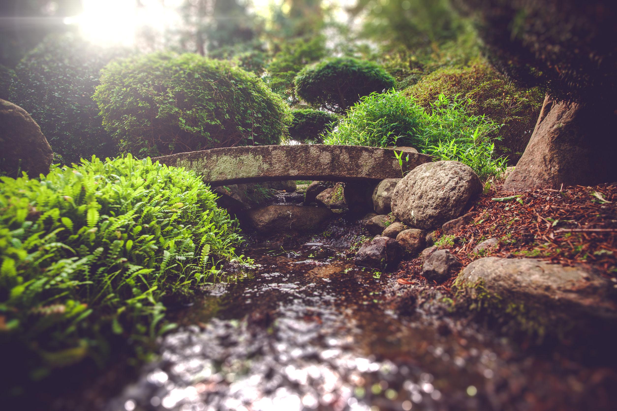 So gestalten Sie einen natürlichen und pflegeleichten Garten