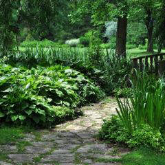 Schattenpflanzen – wunderschöne Pflanzen mit wenigen Ansprüchen