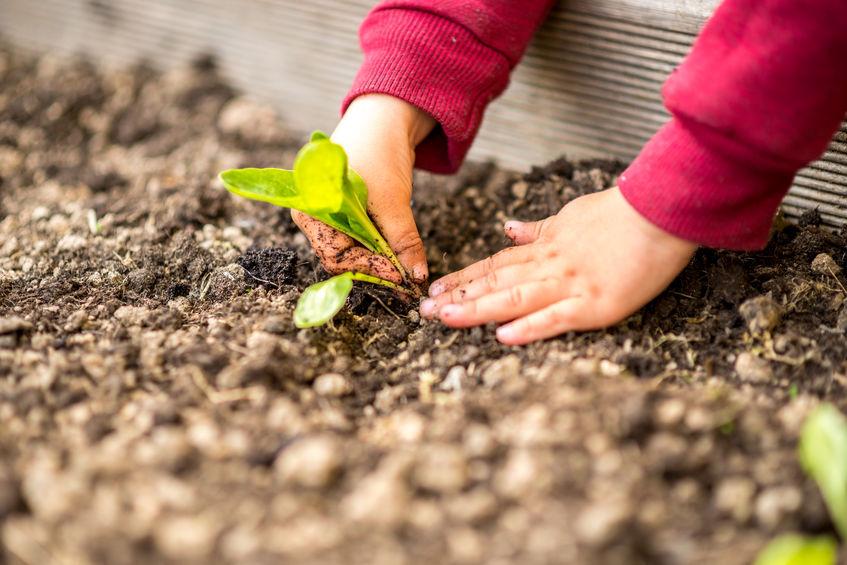Frohes neues Jahr 2020! Gartenarbeit mit Kindern – so macht`s den Kleinsten Spaß