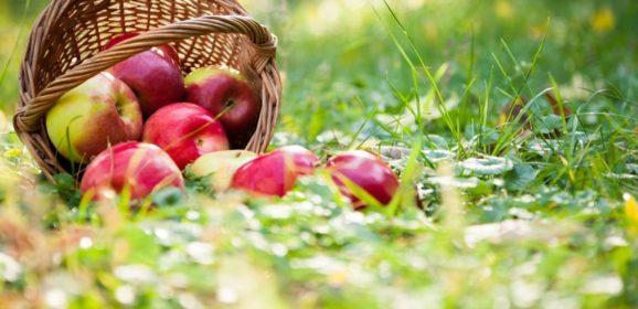 Grenzabstand von Obstbäumen im eigenen Garten