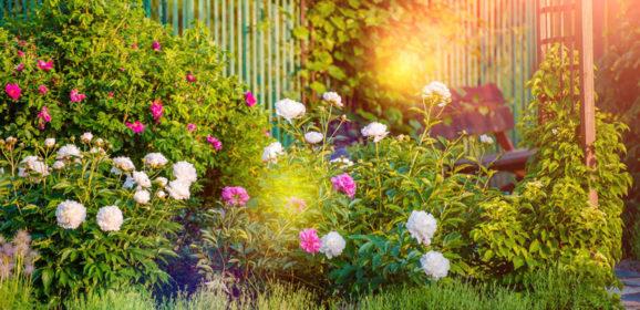 Pflanzenpracht im Garten: So düngen Sie richtig
