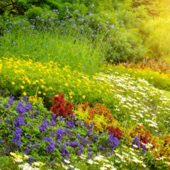 Naturnahes Gärtnern: was ist damit gemeint?