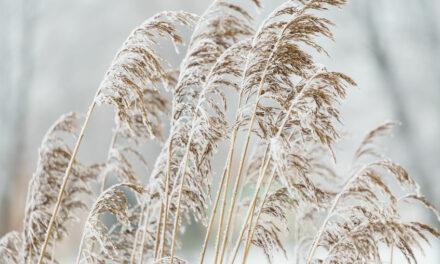 Den perfekten Winter-Garten anlegen