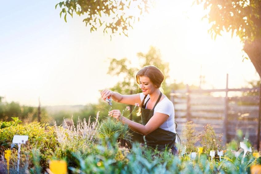 Schnittblumen im Garten anbauen