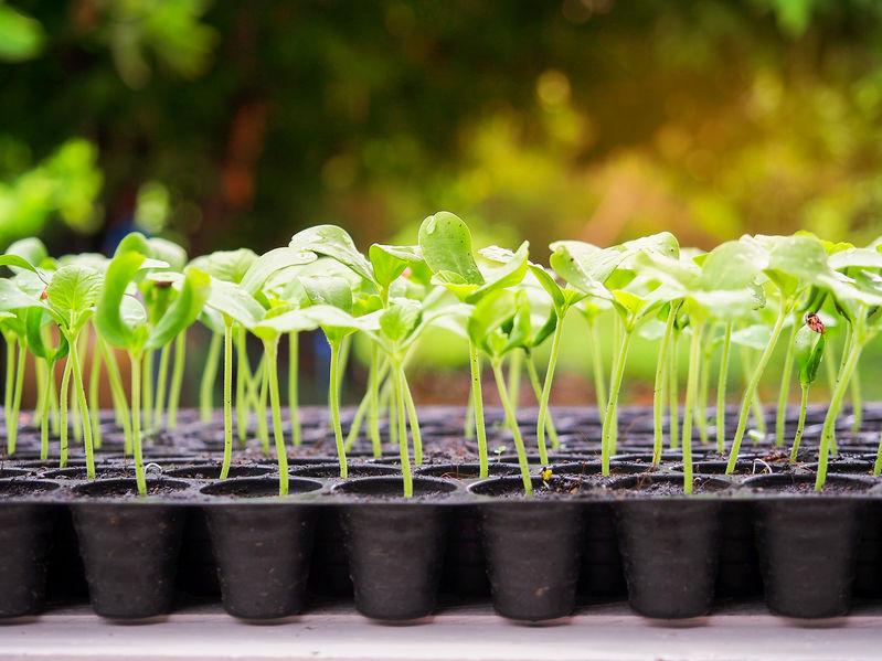 Schon im Herbst an das Frühjahr denken und Gemüse vorziehen