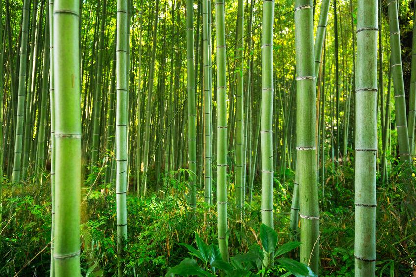 Bambus im Garten – wichtige Tipps