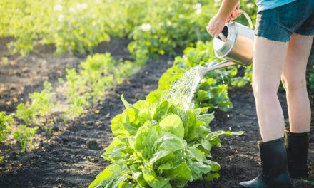 Selbstversorger-Garten anlegen – so wird's gemacht