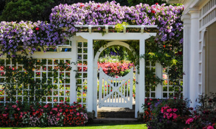 Blühende Sichtschutzzäune erfreuen sich wachsender Beliebtheit