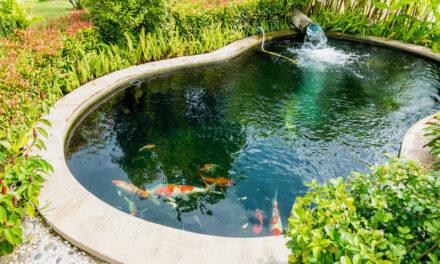 Schwimmteich – Das natürliche Badeparadies im eigenen Garten