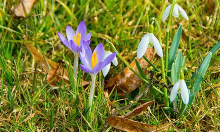 März! Offizieller Start in die Gartensaison. Wir freuen uns!