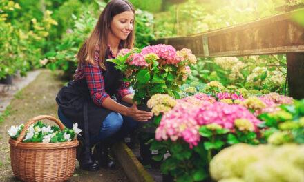 Augen auf beim Pflanzenkauf!