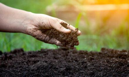 Fruchtbarer Boden ist wichtig für gesunde Pflanzen