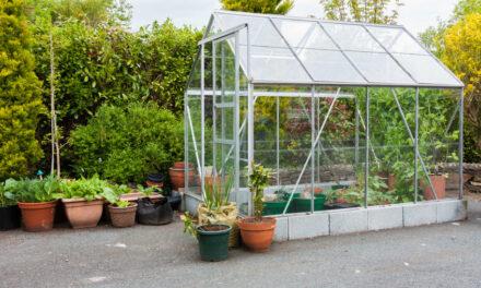 Glücklich Gärtnern im Gewächshaus